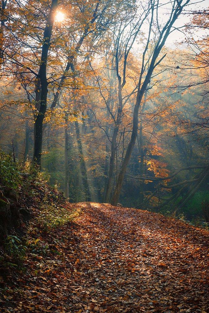 Billede fra en skov