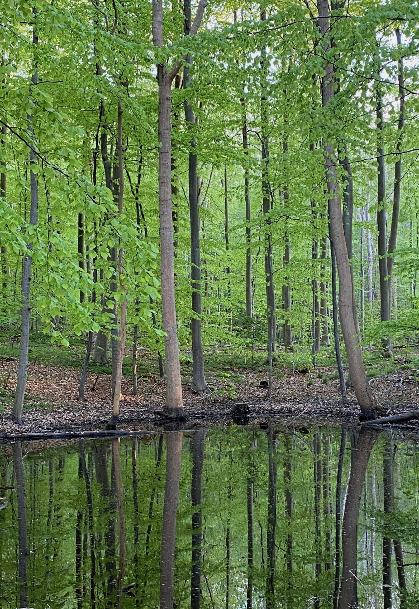 Naturterapi spejle