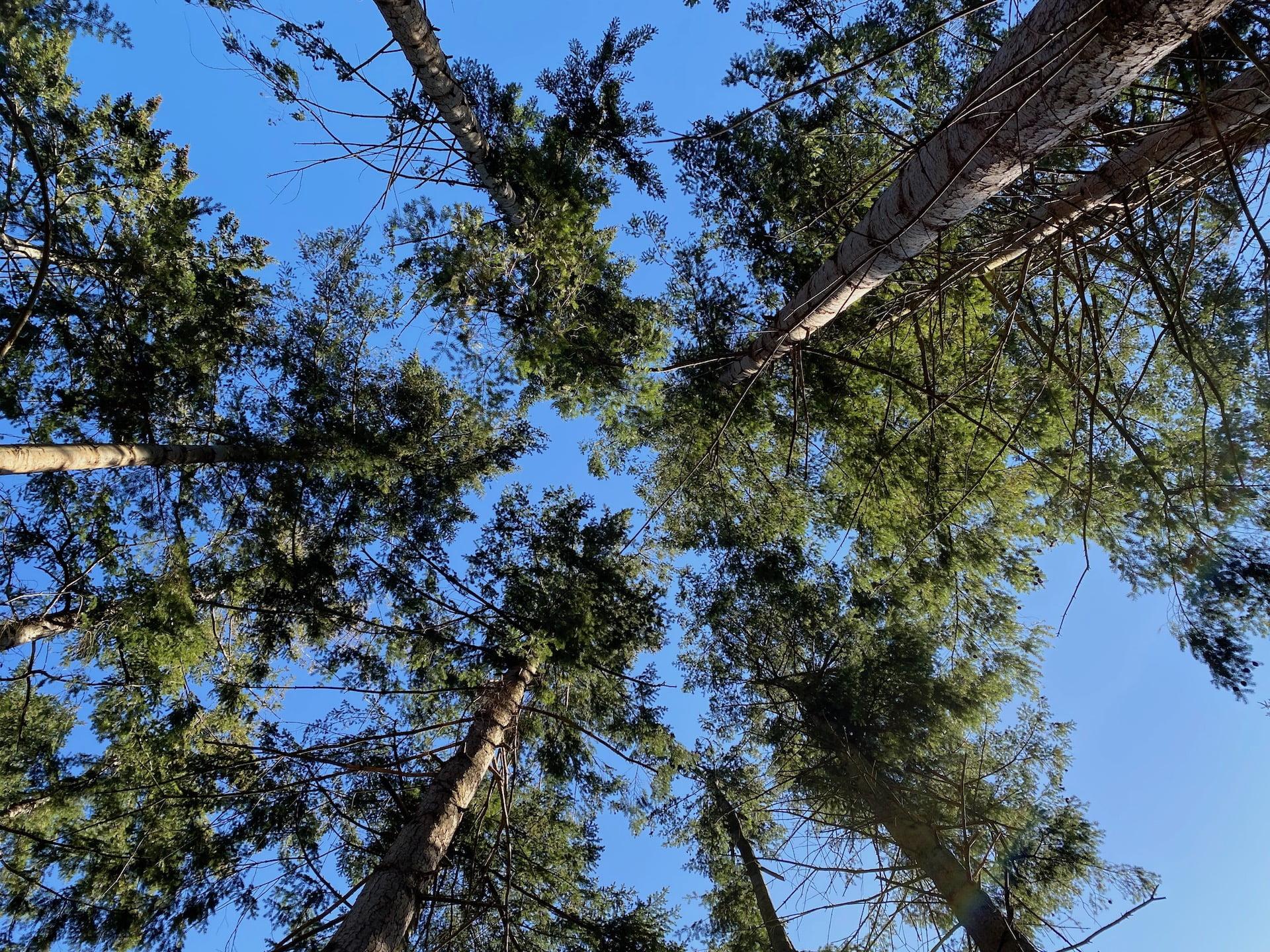 bognæs skov